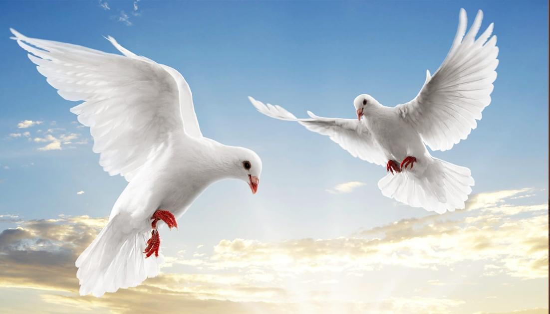 Nền hòa bình tuyệt đẹp - Chúa nhật I mùa vọng - Năm A